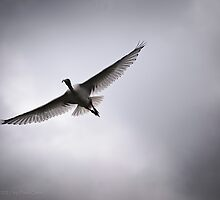 Perfect Wing by Paul Cons