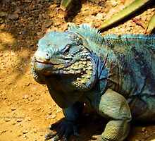 Iguana Closeup by Lori D Myers