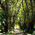 Plane Tree Drive, Adelaide Botanic Gardens by Elana Bailey