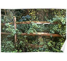 Old Country Fence Poster