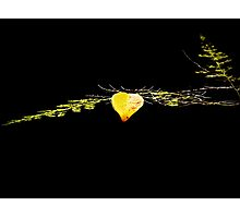 Lonely leaf left alone Photographic Print