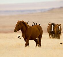 Leading The Way by Kent Keller