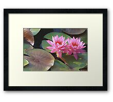 Louise Villemarette Water Lillies Framed Print