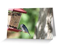 White Breasted Nut Hatch Greeting Card
