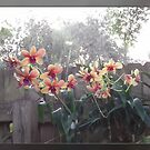 Orchids on a Fence by Ginny Schmidt