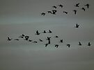 Geese Flying South - Sweet Marsh, Iowa by Deb Fedeler