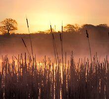 Boarhunt Sunrise by marktc
