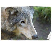 Beautiful in a Fur Coat Poster