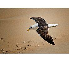 Seagull low level Flight Photographic Print