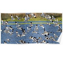 Avocet Flock Poster