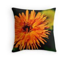 Calendula Officinalis Throw Pillow