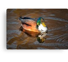 Bibbed Mallard Canvas Print