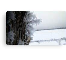 Post Frost Canvas Print
