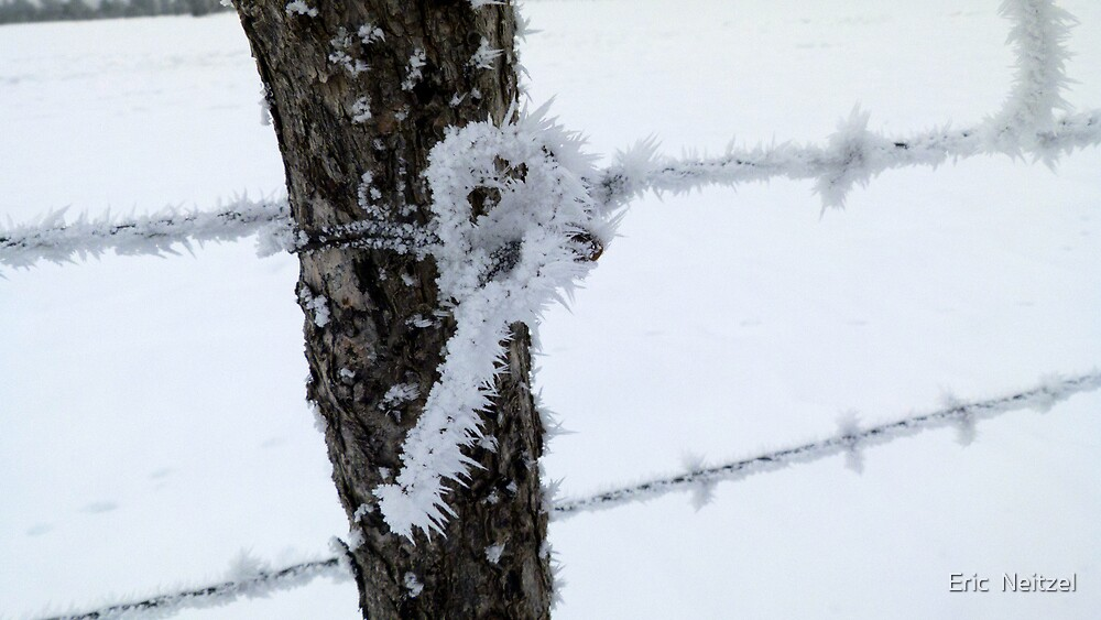 Icy Post Knot by Eric  Neitzel