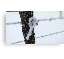 Icy Post Knot Canvas Print
