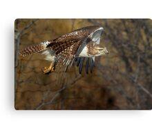 Red-tailed Hawk - Bullet Metal Print