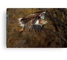 Red-tailed Hawk - Bullet Canvas Print