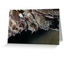 Long-fingered bats (Myotis capaccinii) Greeting Card