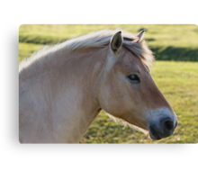 The Horse and the Fly Canvas Print
