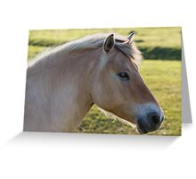 The Horse and the Fly Greeting Card