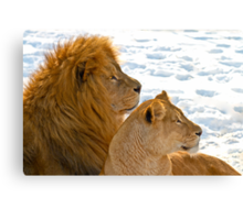 Lions in the Snow Canvas Print