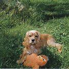Puppy Charlie by maggiepoohbear
