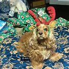 Charlie the Christmas Cocker Spaniel by maggiepoohbear