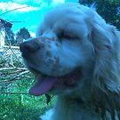 Duncan the cocker spaniel puppy by maggiepoohbear