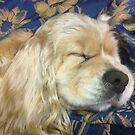 Sleeping beauty by maggiepoohbear
