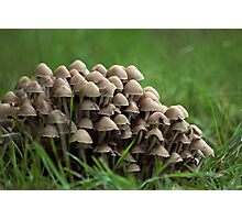 Army of Mushrooms  Photographic Print