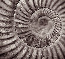 Archimedean spiral by HollyRuthven