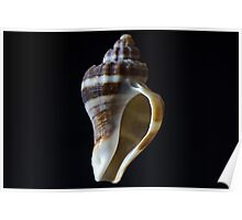 Sea Shell 11 Poster