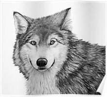 Wolf Sketch in Pencil Poster