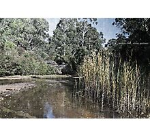 Wolgan River Photographic Print