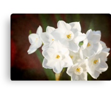 Snow White Daffodils Canvas Print
