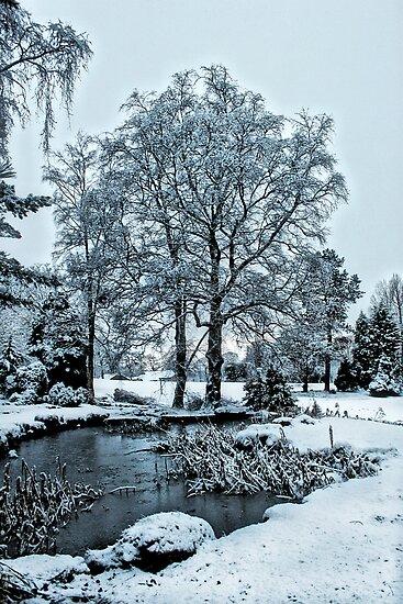 Oak Hill Park by Irene  Burdell