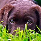 Cadie in the grass by HayleyJS