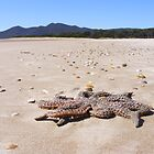 Beached Starfish. by Esther's Art and Photography