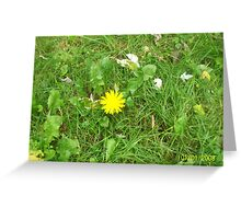 Sunshine in a sea of green Greeting Card