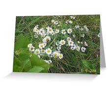 Petite pink daisies Greeting Card