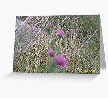 Dainty purple clover Greeting Card