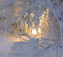 Good Morning Sunshine  by Kari Liimatainen