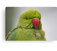 Funny Birds 7 Canvas Print