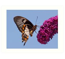 Orchard Butterfly Art Print