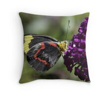 Jezabel Butterfly on Budlia Throw Pillow