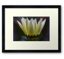 Yellow Gazania Framed Print