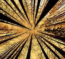 feel dizzy by Kari Liimatainen