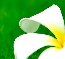 Flower on leaf - case by Nhan Ngo