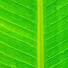Banana green leaf - case by Nhan Ngo
