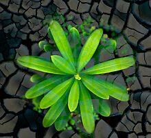 Dry soil - case by Nhan Ngo